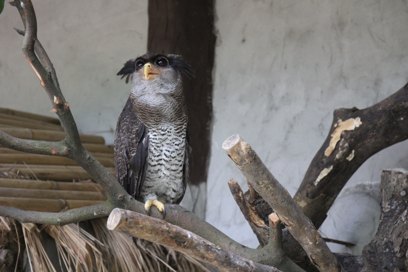 There were a few different types of owls - this was amy favourite.