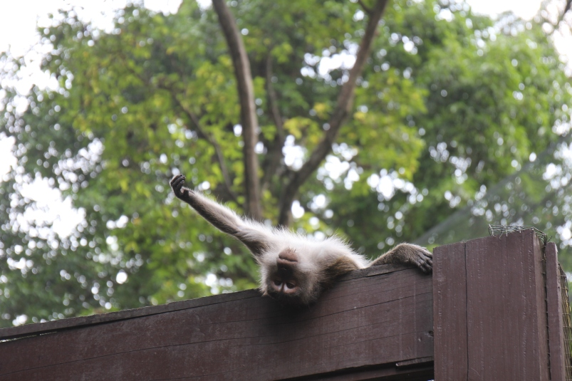 I swear this guy saw us and posed for this photo. This was my first time seeing a monkey since we moved to Asia. Hurray!