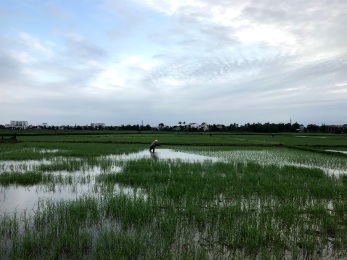 Views of rice paddies.
